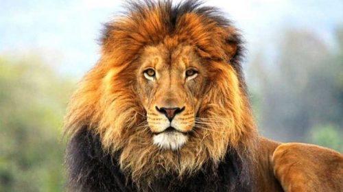 Bolsonaro jogando o filho aos leões?